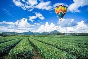 Hot air balloon over tea plantations