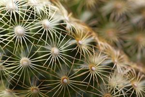 Cactus macro photo