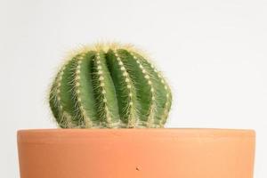 Cactus in Pot photo
