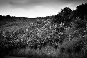 Sicilia photo