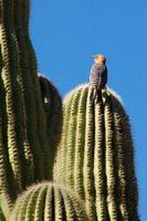 pájaro posado en cactus