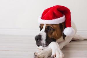 perro triste sombrero de santa foto