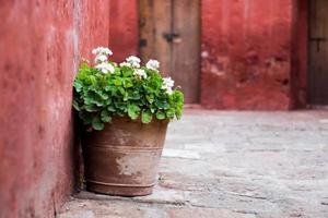 Flora in Santa Catalina Monastery (Monasterio de Santa Catalina)