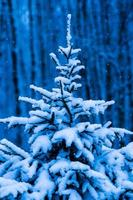 Snow covered Christmas tree against blue background photo