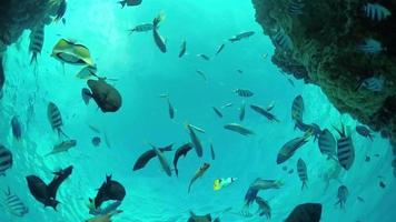 SLOW MOTION UNDERWATER: Seaworld on tropical reef with exotic fish video