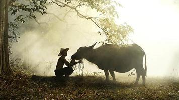 farmar y su búfalo