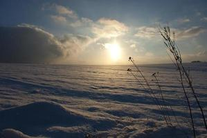 Christmas background snowy field in winter photo