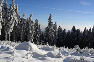 Winterwald photo