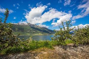 Flowering gardens on the Hardanger fjord background photo
