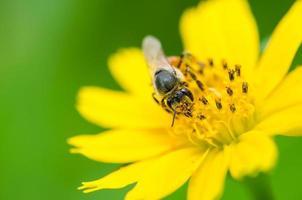 abeja en la naturaleza foto