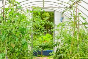 arched greenhouse photo