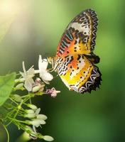 butterfly in the garden with sun light