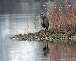 Photo of heron on rocks near water