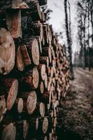 montón de troncos cortados