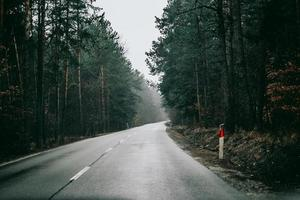 Foggy forest road photo