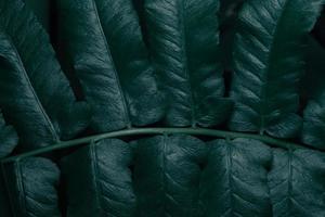 Green leaves, dark background photo