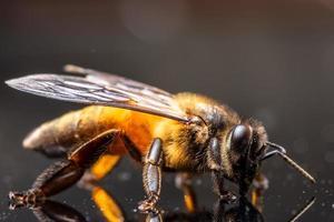 abeja en el espejo