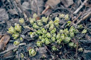 Sprouts growing in forest