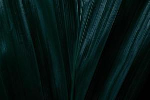Green leaves, dark background
