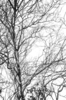 Leafless tree branches in winter forest photo