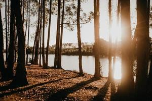 Trees near lake