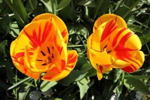 dos flores amarillas en el jardín