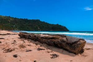 tronco de árbol en la playa