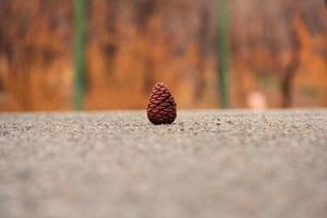 Close-up of a pine cone photo
