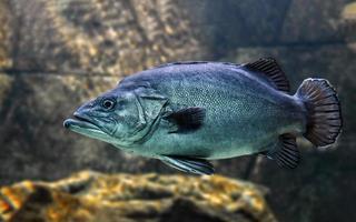peces nadando en el acuario