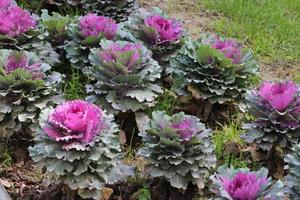 Close up of purple plants