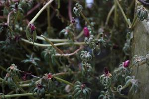 Dried withered flowers