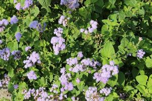 Purple flowers in bright sunshine photo