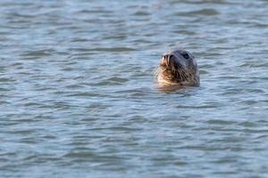 Sea lion head photo