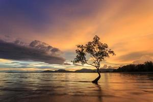 Silhouettes of tree at sunset beach in Phuket, Thailand