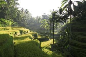 Sights of Bali photo