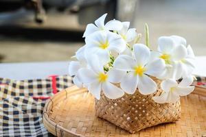 Flor tropical de frangipani blanco, flor de plumeria en canasta de trilla