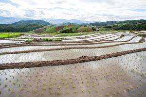 Rice fields on terraced. photo