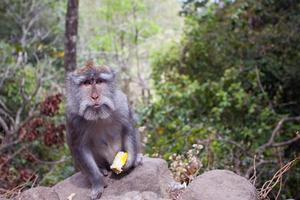 Monkey with a meal photo