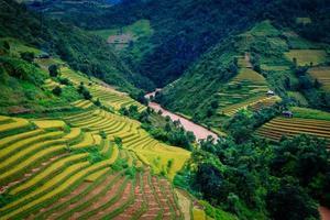 Gold terraced rice fields  in Mu Cang Chai, Vietnam photo
