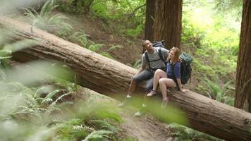 jovem casal de caminhadas sentado junto na árvore caída