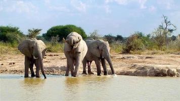 elefante entrando em um poço em um dia ensolarado de botsuana