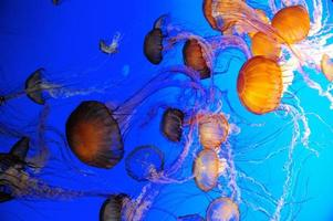 Group of Jellies