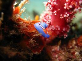 colored nudibranch