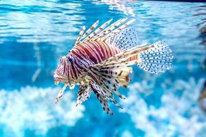 The underwater world. Bright Exotic Tropical coral fish