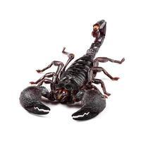 Emperor Scorpion (Pandinus imperator) isolated on white