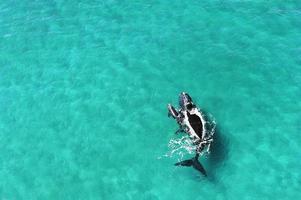 ballenas - madre y cría foto