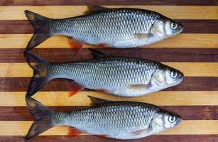 Fresh fishes photo