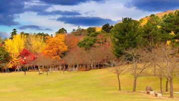 colores de otoño en nara foto