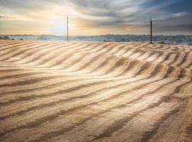 Wavy beveled wheat field photo