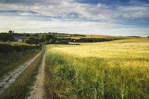 Summer landscape over agricultural farm field of crops photo